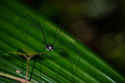 INSECT- spider-0395