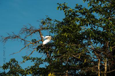 BIRD-  egret-0236