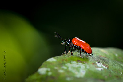 INSECT- -0389