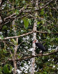 BIRD- stork-0063