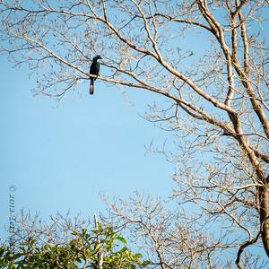 BIRD- hornbill-0241