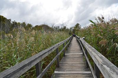 Currituck Beach Lighthouse - Outer Banks, NC