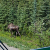 Sat, June 22, 2013 - Denali National Park.