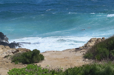 from the lanai we could watch the sea turtles swimming in the waves