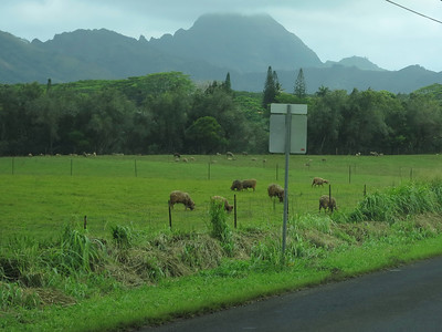is it Kauai or Scotland?