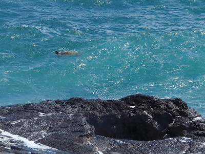 Spouting Horn turtle