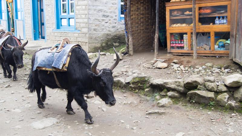2013 Nepal -62