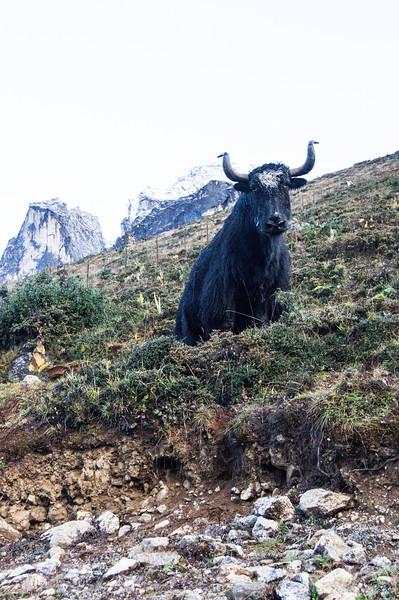 2013 Nepal -151