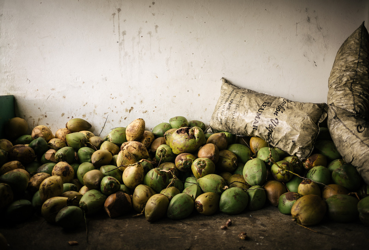 Fresh coconuts await the next customers in a roadside tourist stop in a Puerto Rican rainforest.