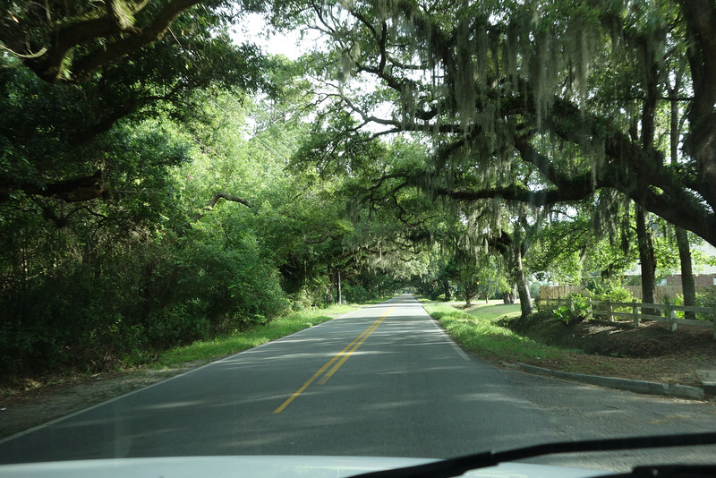 The road to Skidaway State Park.