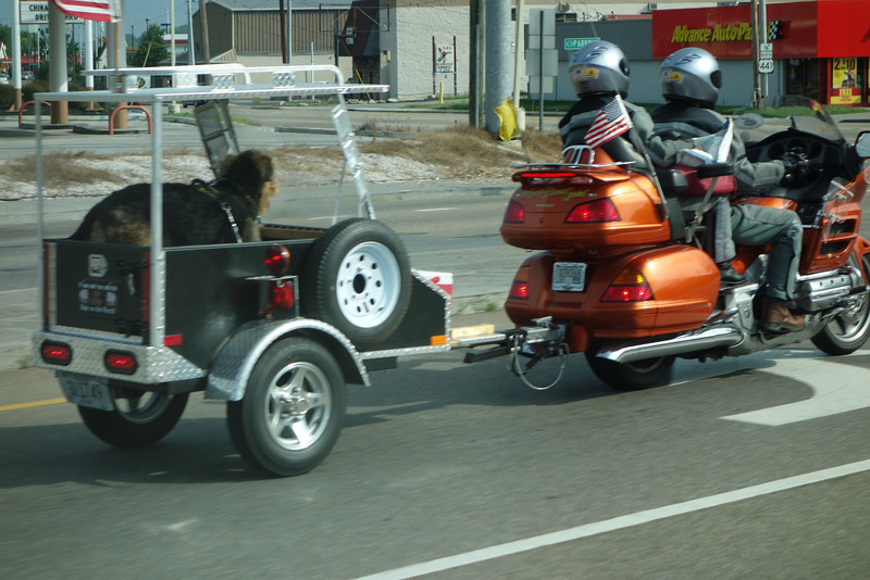 Shot this out the window while driving.  I've never seen a dog towed in a trailer behind a motorcycle before.