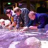 2013 Sea Life Kansas City 001