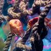 2013 Sea Life Kansas City 003