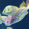 2013 Sea Life Kansas City 004