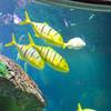2013 Sea Life Kansas City 002
