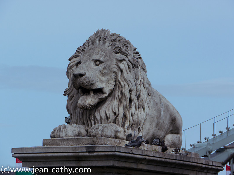 Lion bridge statue in Budapest