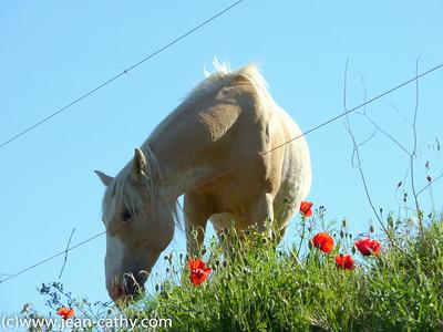 Languedoc Rousillon 2010 -  (20 of 65)