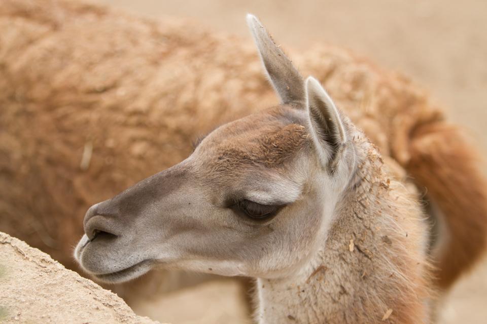 IMAGE: http://www.photographybymalcolm.com/Travel/2013-Travel/San-Diego-Zoo/i-WcWMR9Z/0/XL/IMG_1424-XL.jpg