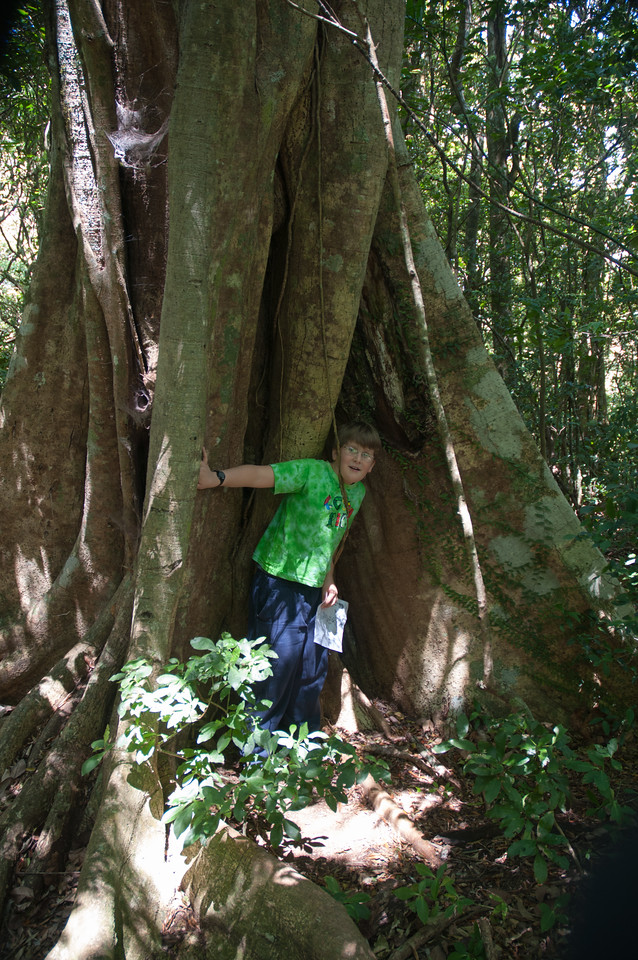 Andy about to be strangled by this strangler fig.