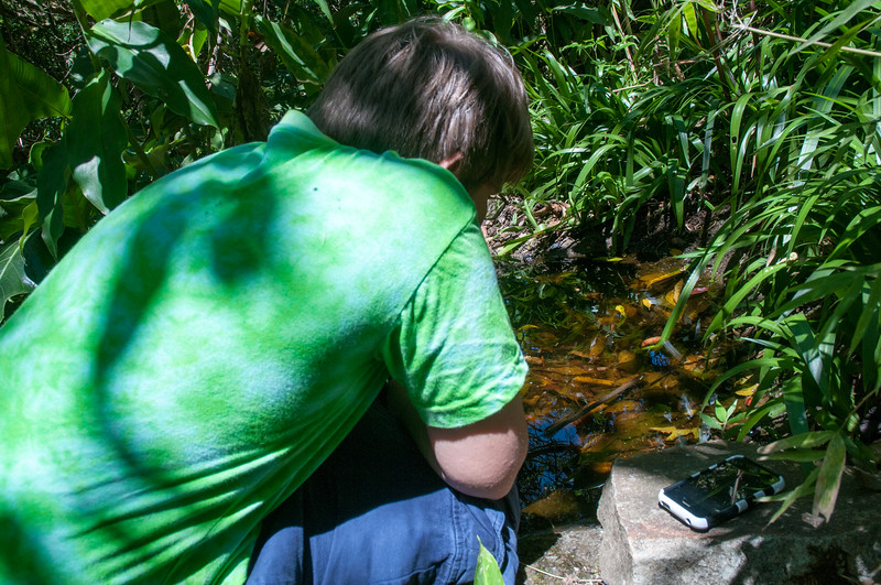 Andy studies a tiny pond teeming with newts and insect larvae.