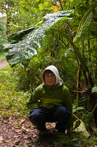 """Andy sits under an """"elephant ear"""" plant."""
