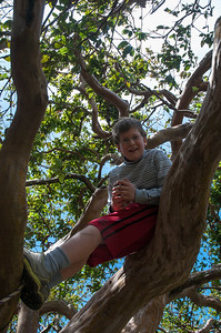 Andy climbs a tree in Costa Rica.