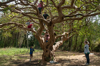 The kids found a wonderful tree where they could climb and swing.