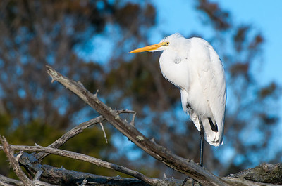 An egret waits for the sunset  - Kiawah Island, SC.