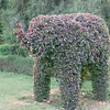 Elephant in the Lalbagh botanical garden.