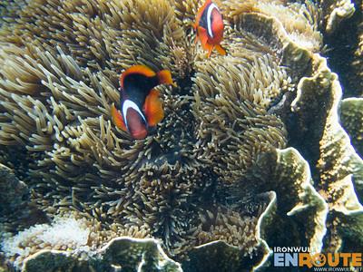 Snorkeling Mantigue Island Marine Sanctuary