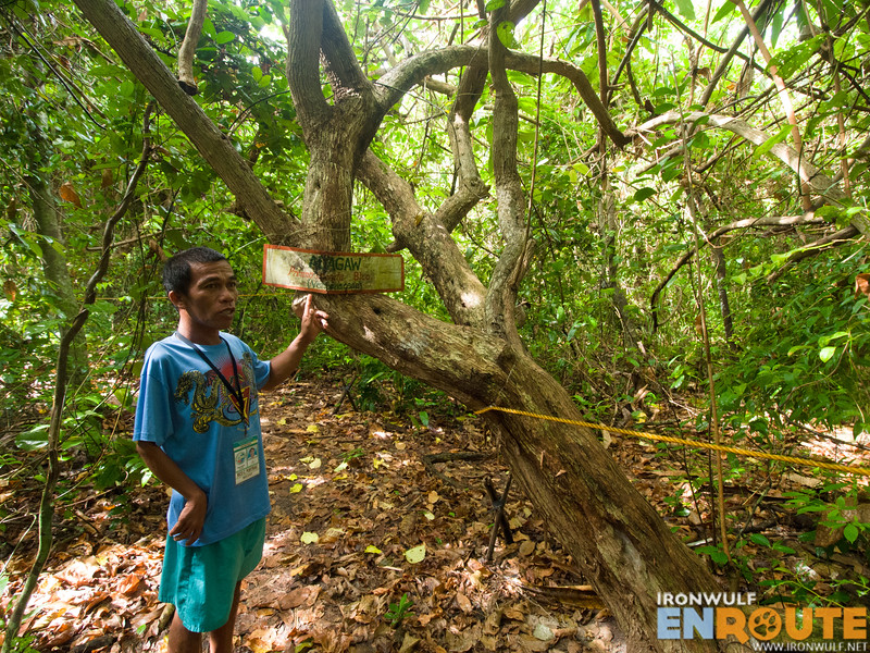 Our local guide and island resident Ikoi leading us at the forest trail