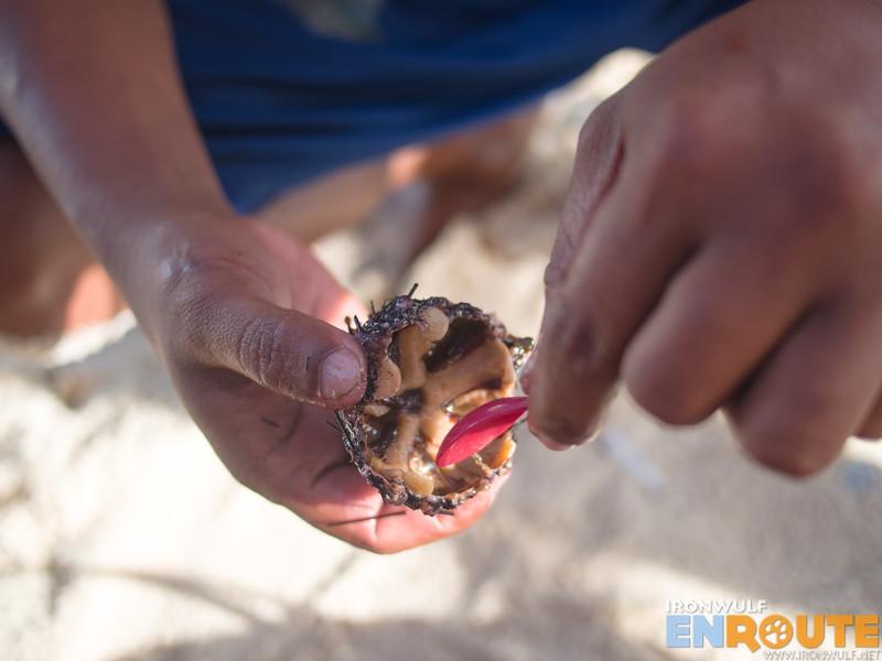 The edible innards of a swaki (sea urchin)