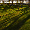 Late sun through the trunks of the cherry tree grove around the Kastellet.
