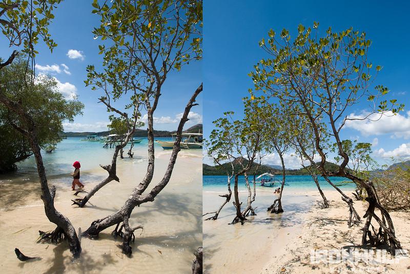 Beautiful mangroves at CYC Beach