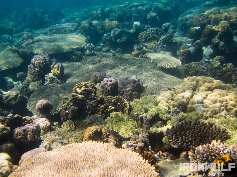 Impressive coral reefs in Balinsasayaw Reef