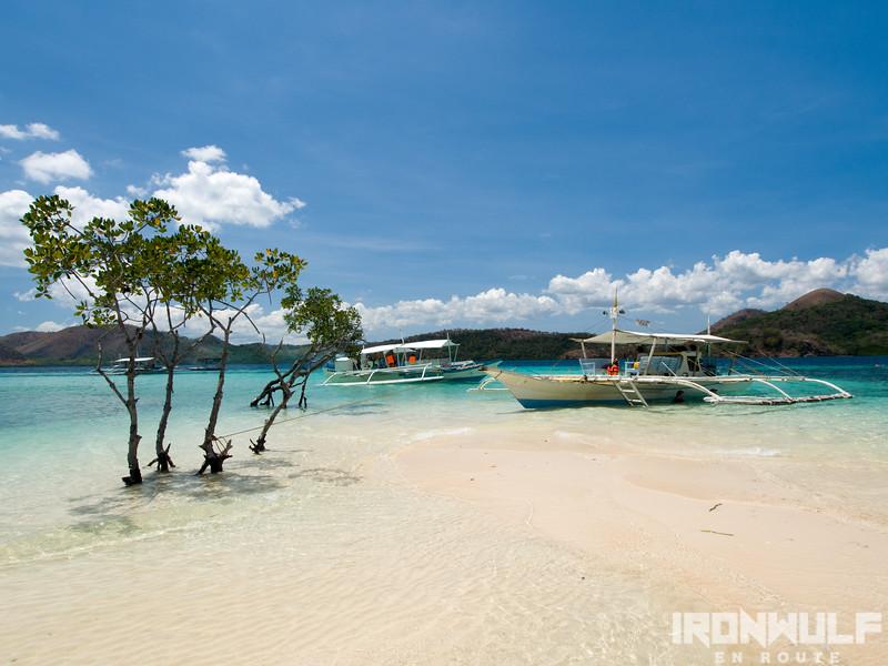 Beach and mangroves at CYC beach