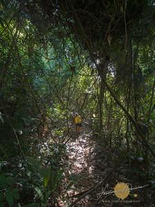 The hike to the Big Bulalacao Falls