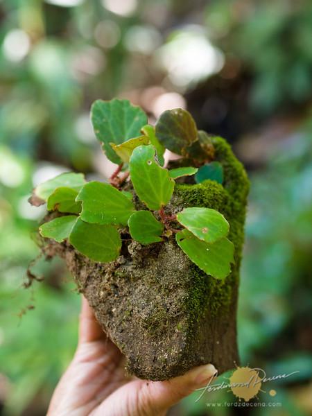Interesting flora on the mossy rocks