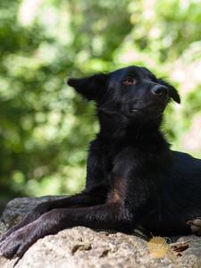 Spike the Bulalacao Falls Guide Dog