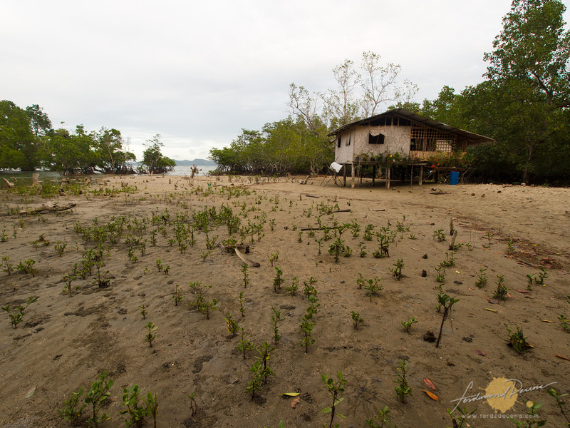 A house amidst mangroves