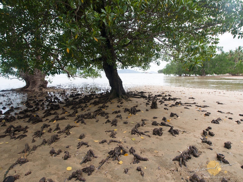 Beautiful mangrove roots