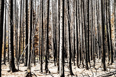 The result of the Table Mountain fire of 2012 - eastern Washington