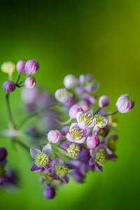 Flowers June 29, 2013