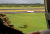 Helicopter takeoff at Hilo International Airport (Laurel in foreground)