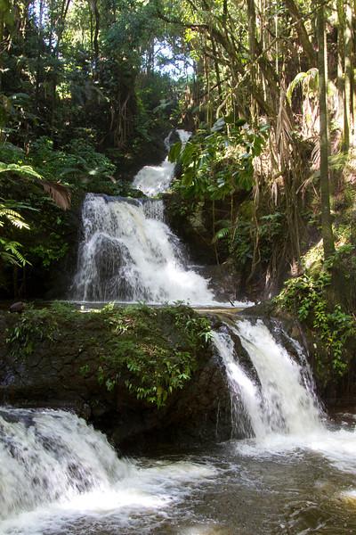 Hawaii Tropical Botanical Garden, north of Hilo, HI