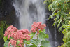 Kamae'e Falls at World Botanical Gardens, near Hilo, HI