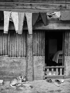 Dog and door