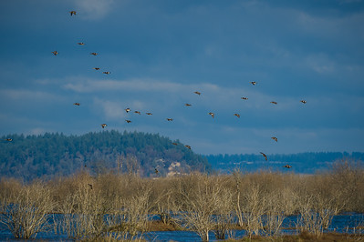 Waterfowl flying over the refuge