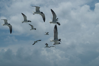 Ferry ride to Ocracoke Eager gulls