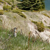 Columbia Ground Squirrel pauses to enjoy the view at Two Jack Lake